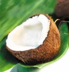 Coconut-Leaf-286x300